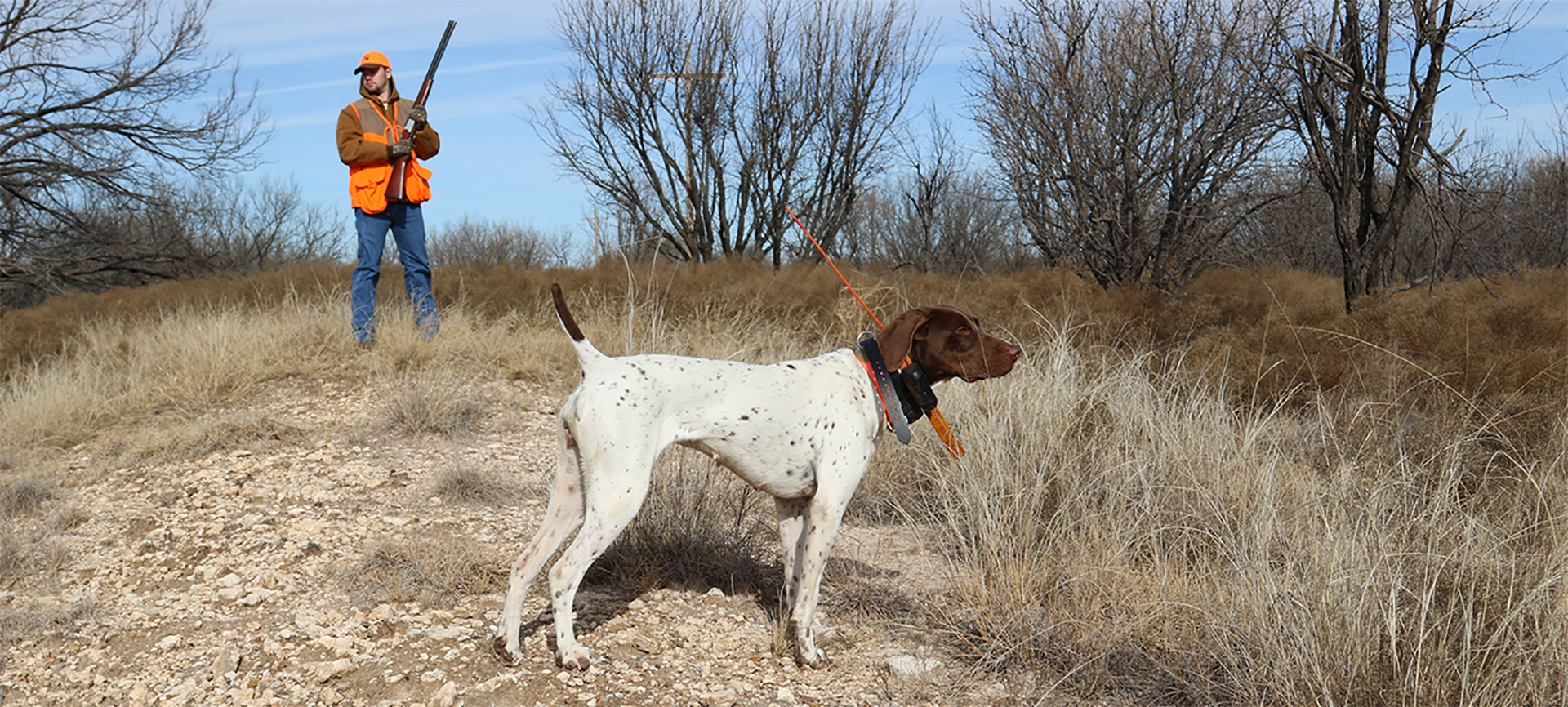 Guided Upland Hunts in Texas